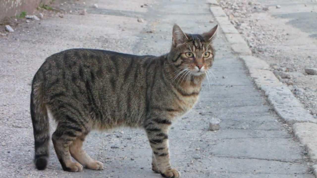 tiger ein kurzer clip ber eine katze tiger a short clip of a cat youtube. Black Bedroom Furniture Sets. Home Design Ideas