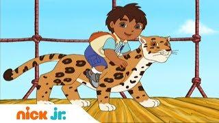 Гоу, Диего, Гоу! | Помощь детенышу-ягуару | Nickelodeon
