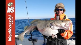 Wielkie, głębinowe dorsze. Zimowa wyprawa Jacka Kolendowicza do Norwegii. Podwodne zdjęcia ryb.