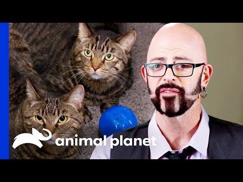Can Jackson Put an End to These Cat's Bad Eating Habits? | My Cat From Hell