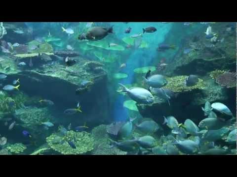 Siam Paragon Aquarium, Bangkok, Thailand
