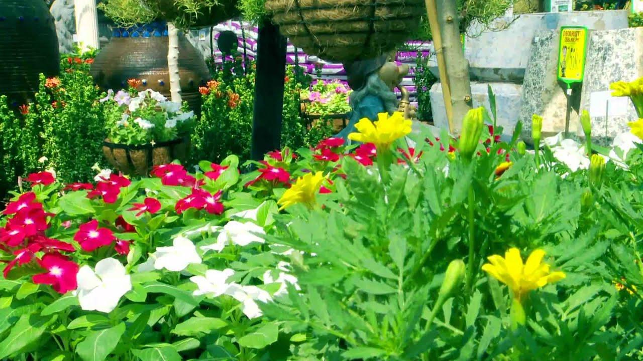 Garden Centre: Dubai Garden Centre