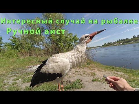 Александрова Наталья. Читать книги онлайн, скачать книги