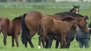 Das Gestüt Part 3/4 Ganze Tierdokus, Dokumentation deutsch, Pferdedokumentation, komplett ansehen