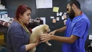 Inspiring Animal Rescue shelter in Pune ResQ