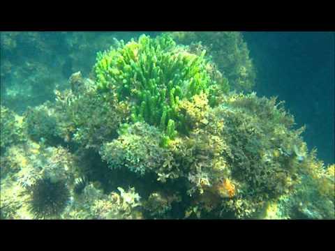 Vero Beach, Fl Snorkeling