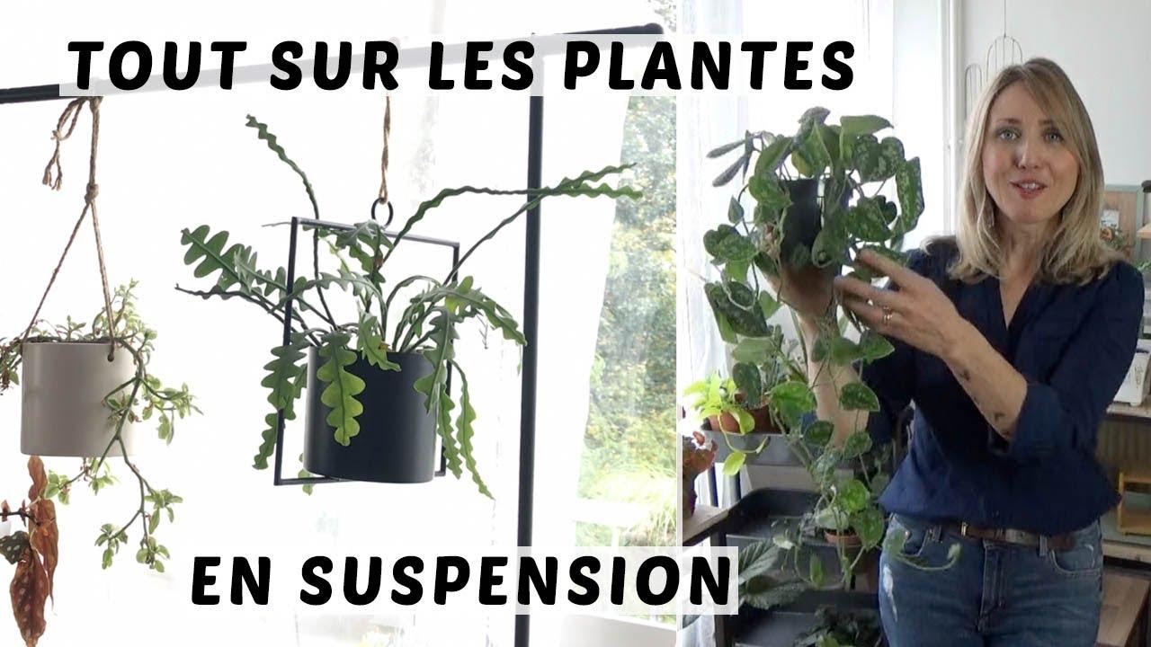 Suspension Pour Plantes D Intérieur ? plantes en suspension : comment les accrocher, comment arroser, quelles  plantes pour suspendre