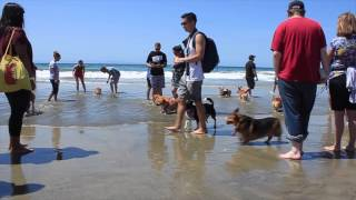Socal Corgi Beach Day 2015