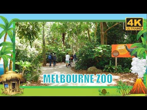 Melbourne ZOO Australia  - Walking Tour DJI OSMO Pocket 4K