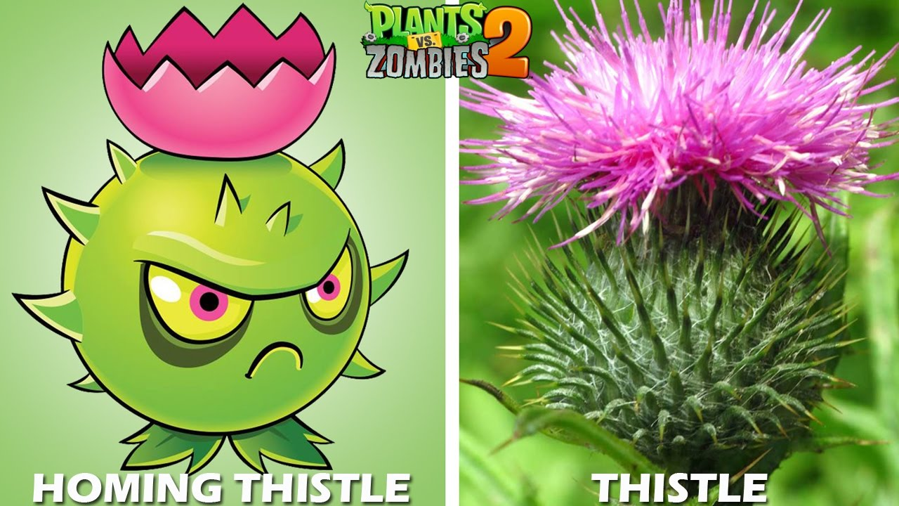 Plants Vs Zombies 2 Characters In Real Life Part 2 Youtube