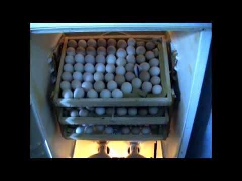 Инкубатор с холодильника своими руками видео