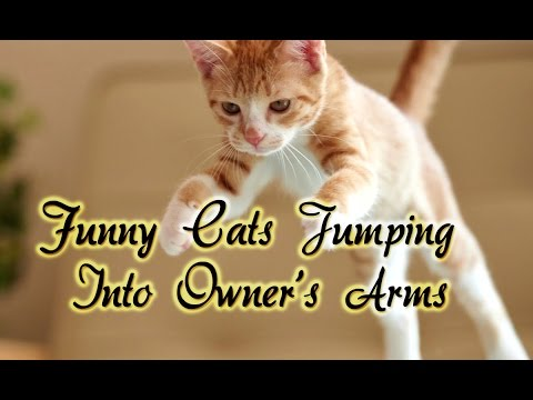 Funny Cats Jumping Into Owner's Arms Compilation    NEW HD react by funny video universe