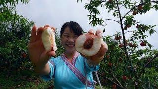 高山桃子肉嫩脆甜,秋子为何还是愁眉苦脸?感叹果农艰辛着实不易
