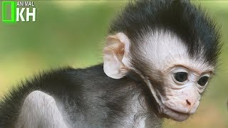Mum Careless With Newborn Baby Monkey Try To Clam Up The Tree