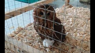 Кормление сов и змей живыми мышами на выставке экзотических животных. СЛАБОНЕРВНЫМ НЕ СМОТРЕТЬ!🙈