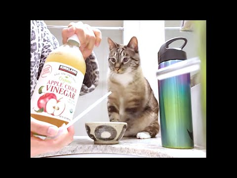 how-to-add-organic-apple-cider-vinegar-into-cat-food-—-holistic-healthcare-for-cats-see-notes-w/info