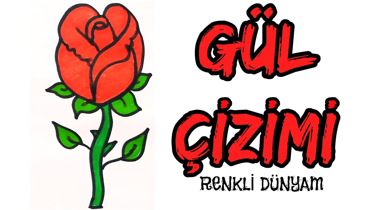 Gul Nasil Cizilir Cicek Cizimi How To Draw A Rose Renkli