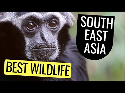 Southeast Asia Best Destinations For Wildlife Photography