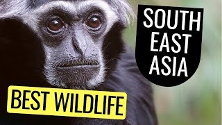 Best Places To See Wildlife In Southeast Asia