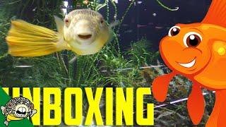 unboxing aquarium fish goldfish included quarantine time lapse