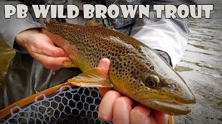 Fly Fishing Specimen Wild Brown Trout - AP Fly Tying