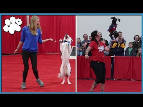 ALL STAR STUNT DOGS! [ With Hero from AGT ]