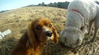 Gopro Hd: Max And Mocha's Walk