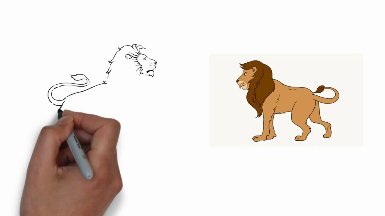 We Drawing How To Drawing A Lion Full Body