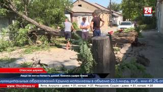 Спил деревьев Симферополь(, 2016-08-15T18:58:29.000Z)