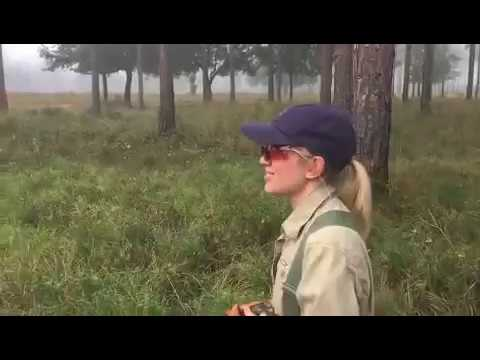 More Gilchrist Quail Hunting