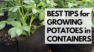 BEST TIPS for GROWING POTATOES in CONTAINERS : How to Grow Potatoes in Containers in Arizona