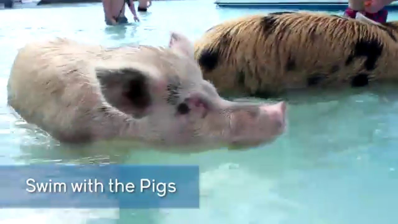 Swim With The Pigs in Exuma from Nassau