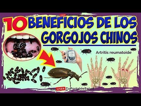 Gorgojo Chino Curativo y sin Efectos Colaterales | 10 Beneficios de los Gorgojos Chinos