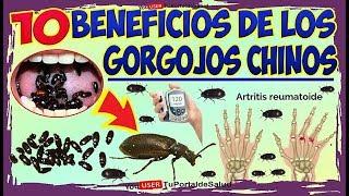 Gorgojo Chino Curativo y sin Efectos Colaterales | 10 Benefici…