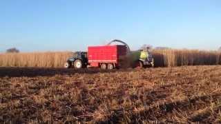 Miscanthus Harvest 2015 Kilkenny Ireland