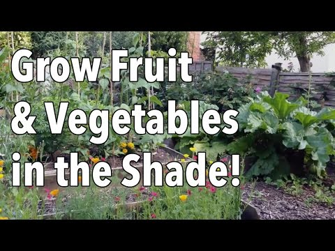 Grow Fruit And Vegetables In The Shade