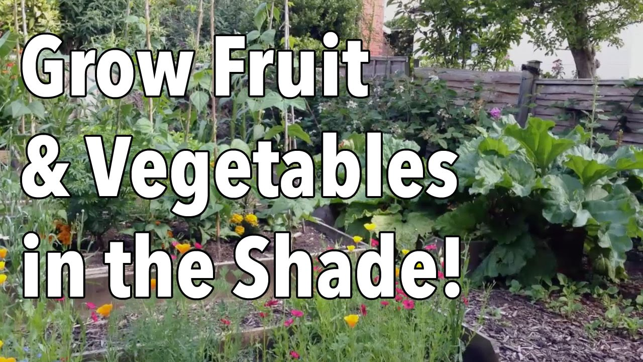 Grow Fruit And Vegetables...in The Shade!   YouTube