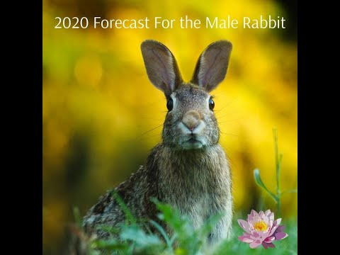 Will The Rabbit Be Lucky In 2020? New Astrology  Forecast For The Male Rabbit