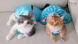 이 깜찍이들은 누구냥? 한복 입은 고양이들
