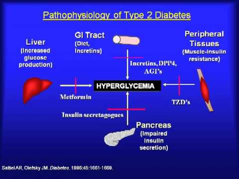 Update on Diabetes Therapy & Complications: What to Use & When