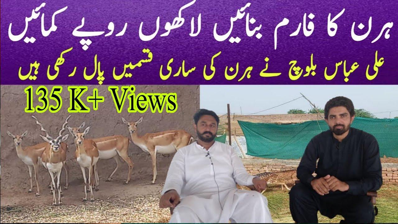Download Deer Farming in Pakistan |Deer Farming Business|Hiran Farming in Pakistan|Deer Farming|Village info