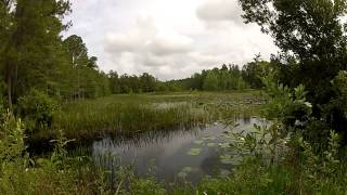 A Vital Ecosystem Pasture Reserve in Green Swamp