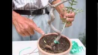 Creación de bunjín en tronco seco