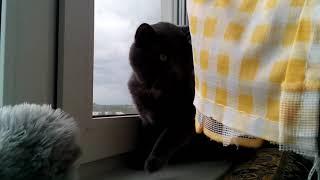 Кот испугался шара