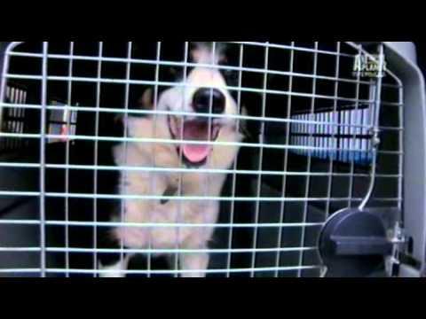 Спасение собак 02 серия
