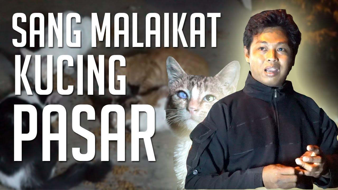 Nama Nama Kucing Jantan Dan Betina Yang Bagus Youtube