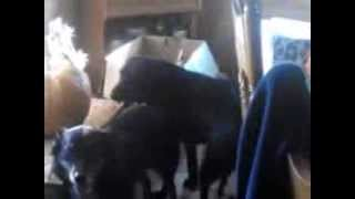 2 Male Dogs Mating Help!!