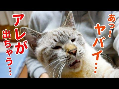 撫でられて気持ちよくなりすぎた猫が催してしまいました…