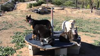 Doggie Boot Camp Aggressive Dog Training Orange County