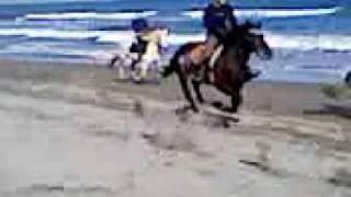 定期的に大竹海岸に外乗へ行きます 外乗、乗馬、ホーストレッキング、馬...